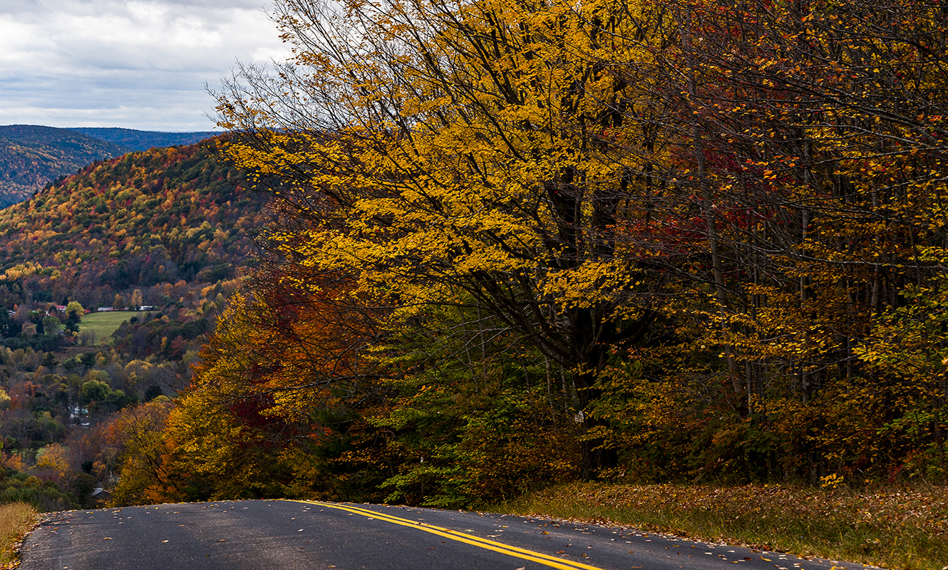 Fall in the Finger Lakes Region- leaves changing on the trees
